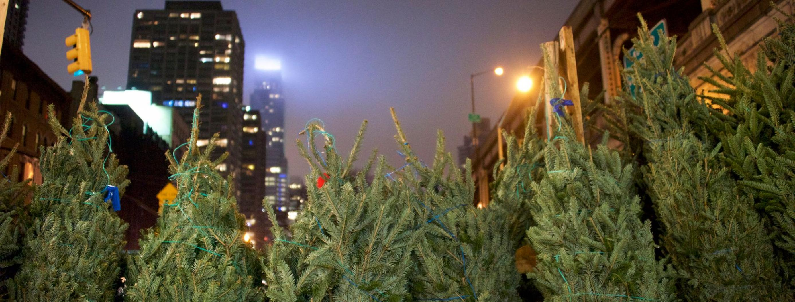 Amazon Plans to Sell and Ship Real Christmas Trees This Year