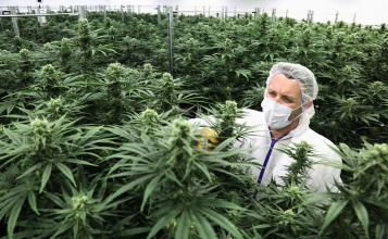 What Does Cannabis Legalization Mean for the Economy?
