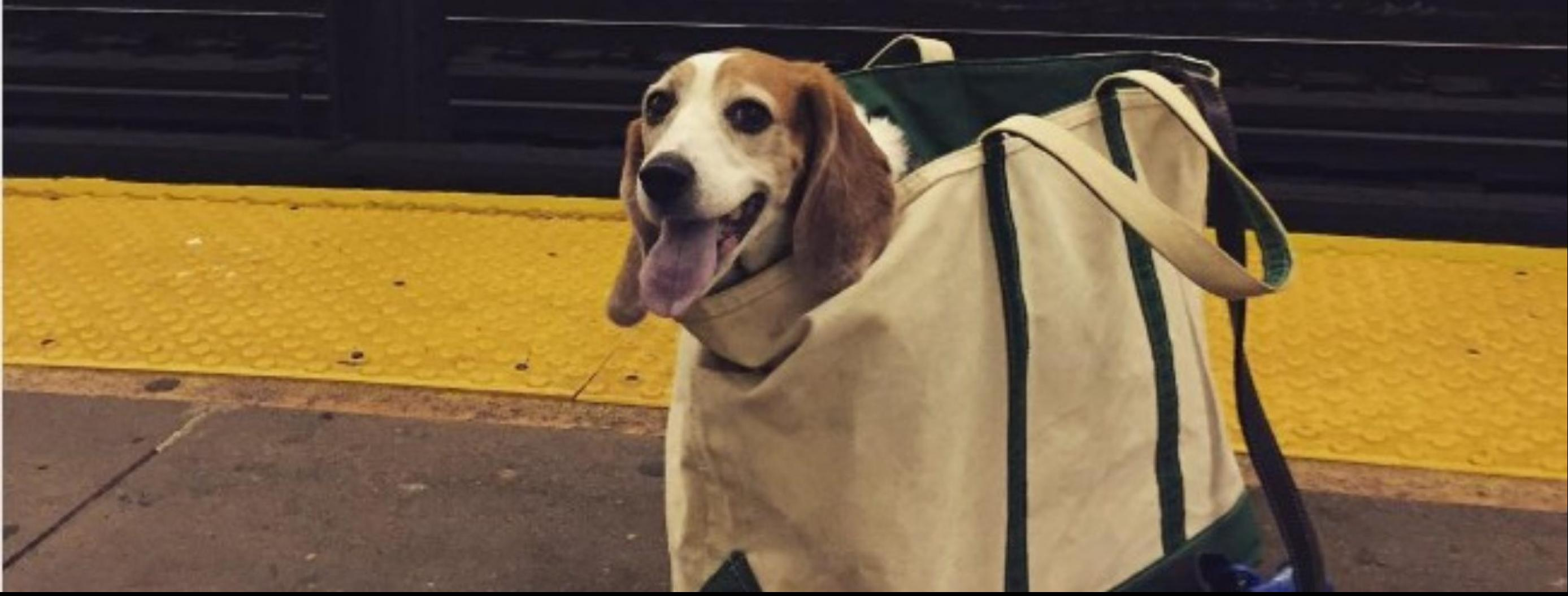 NYC Subway Bans Dogs Unless they Fit Into Bags and Here's the Solution