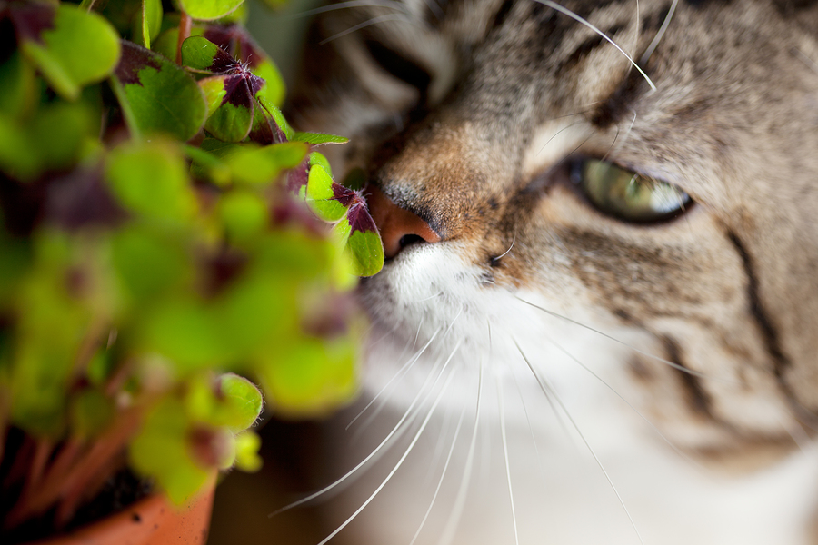 13 Popular Plants That Are Poison To Your Loved Pets